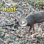 october bow hunt