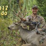 diy colorado mule deer