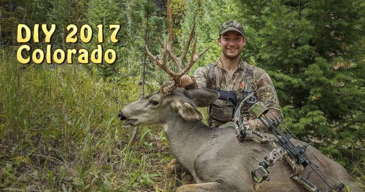 diy colorado mule deer